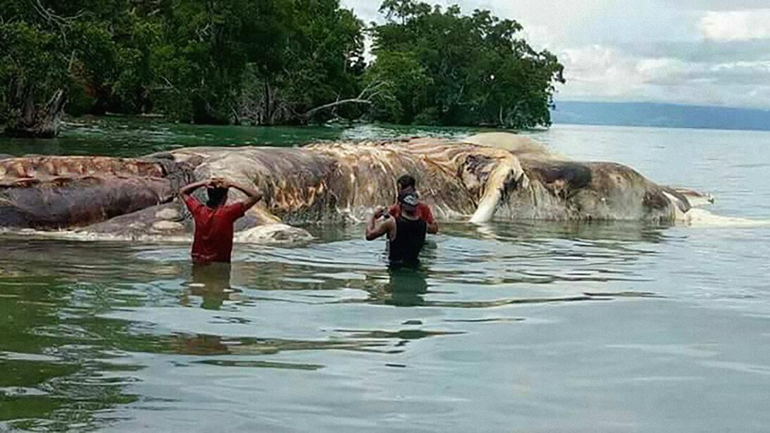 Calamar Indonesia