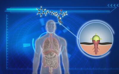 Cómo atacan los opiáceos sintéticos al cuerpo humano y cómo llegan estos...