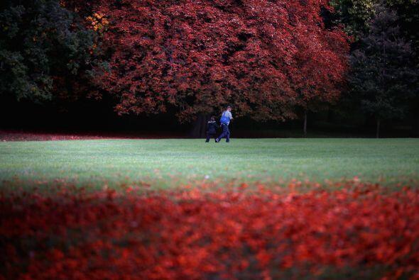 La gente camina  sobre las hojas caídas , los árboles comienzan a tomar...