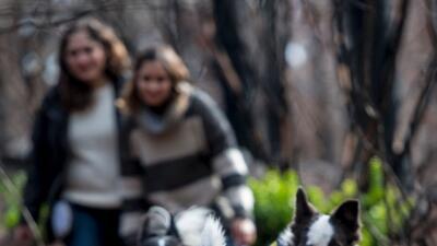 Una mujer y tres perras reforestan los bosques quemados de Chile… ¡jugando!