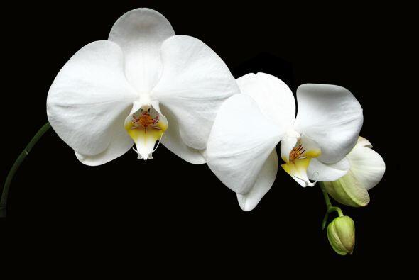 Flores blancas, orquídeas y lirios, claveles y rosas todo lo que pueda a...
