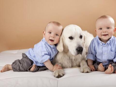 Esto sucede porque al estar en contacto con un canino, un niño es...