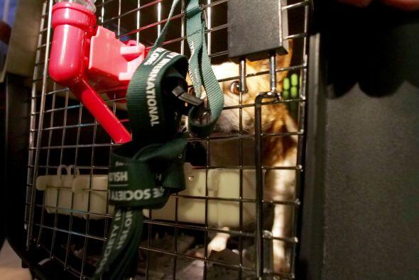 Tawny Hammond, directora del Fairfax County Animal Shelter señal&...