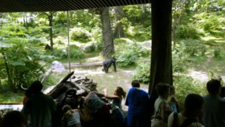 El zoológico del Bronx.