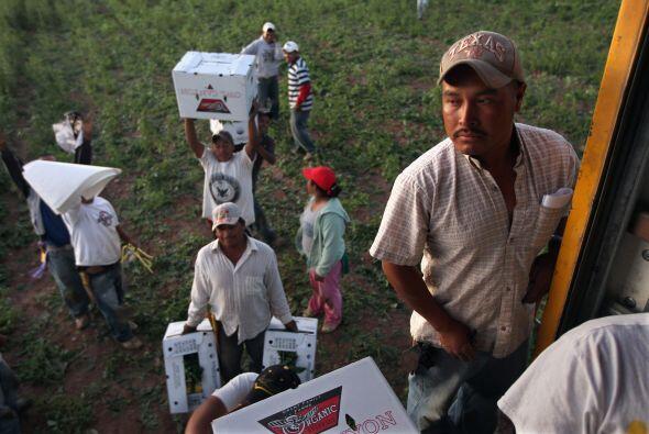 Cientos de trabajadores latinos y sus familias sufren en la actualidad p...