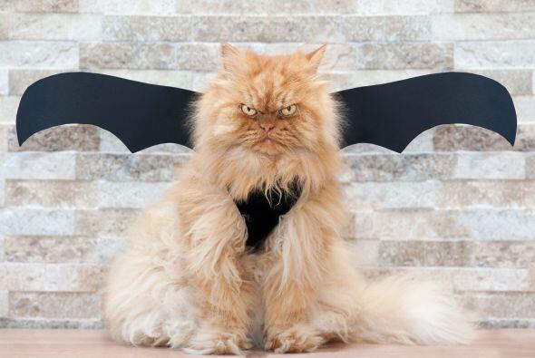 Tranquilízate: esas alas no lo hacen ver tan aterrador. ¿O sí?