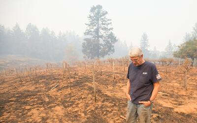 Chris Schrobilgen camina en un viñedo devastado por los incendio...