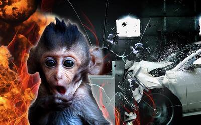Categorías de Autos monkey3.jpg