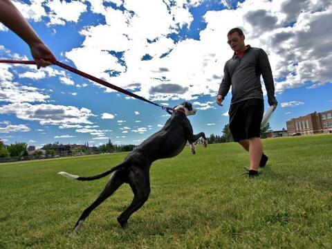 Los perros son el mejor amigo del hombre, pero este canino no sól...