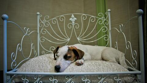 Hoteles 'pet friendly' en San Francisco