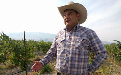 Robledo tiene 350 acres de viñedos y bodegas en Sonoma, Napa, Men...
