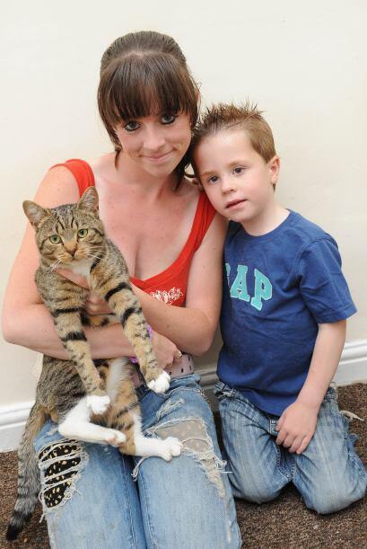 Su mascota, un gato, se abalanzó y salió por la ventana de...
