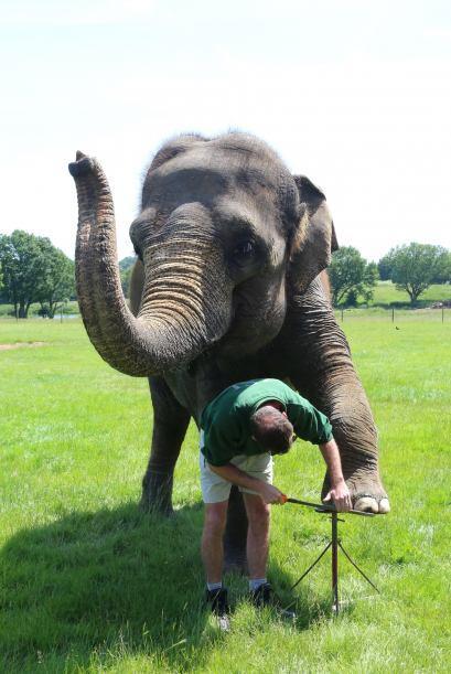 Como cada año el zoológico tiene un gran evento anual llamado 'The Big N...