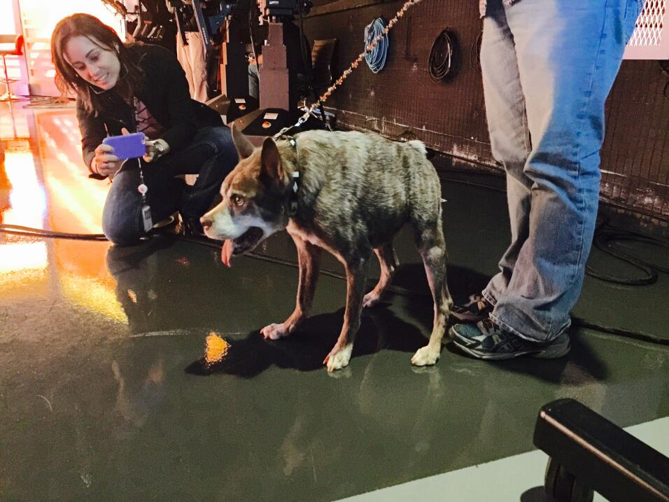 Quasi modo, el perro más feo del mundo visitó Univision
