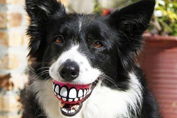 ¡Tu perro hará reír a todos tus conocidos!