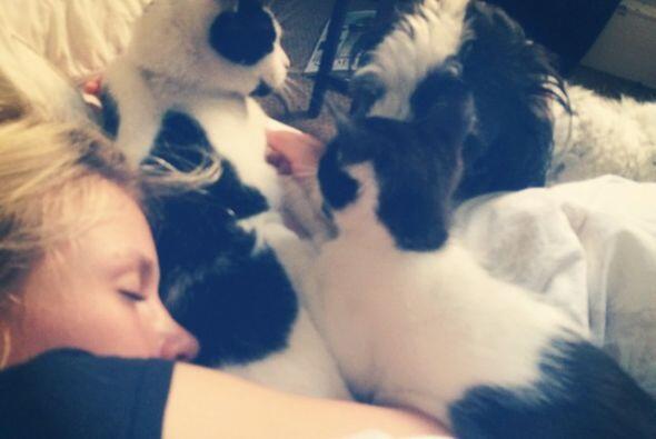La modelo rusa Anja Konstantinova tiene dos gatitos, una hembra que se l...