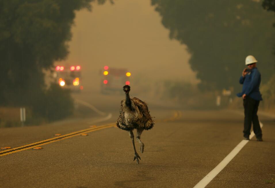 Incendio en Potrero California
