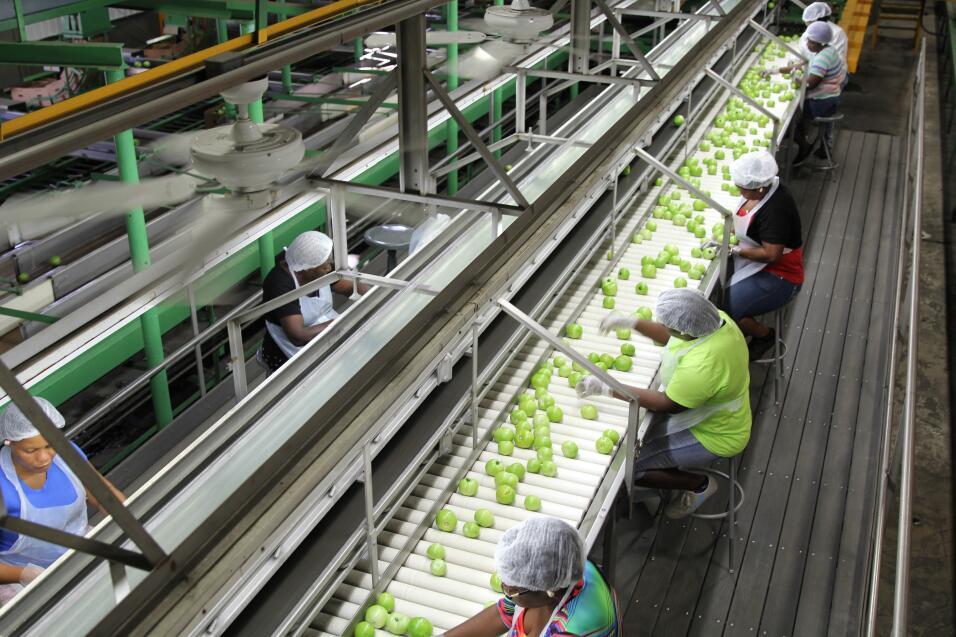 Una planta procesadora de tomates en Immokalee, Florida. Casi todos son...