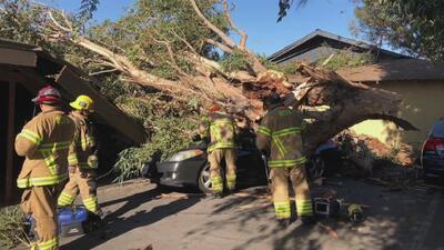 Mujer muere al caer un árbol sobre su vehículo