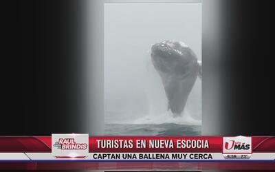 Turistas captan el salto de una ballena