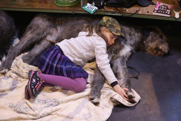 Wolfhound Irlandés: Este gran amigo, que en la antigüedad er...